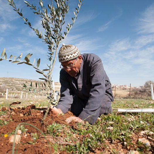 Celebrating the Palestinian Jubilee