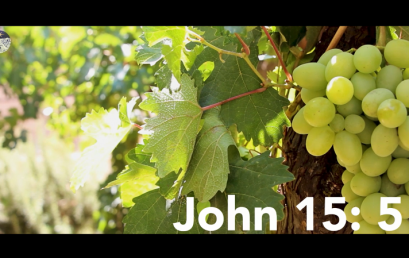 I am the Vine Scripture+Meditation