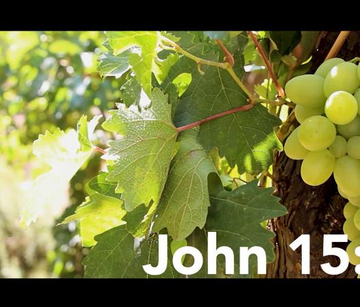 I am the Vine Scripture+Meditation